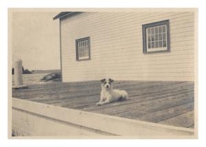 vintage dog 001